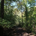 Hiking trail in the woods.