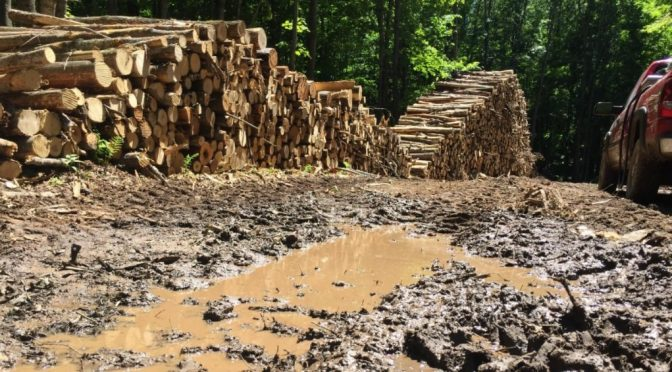 Deforestation…Nah Not In Wisconsin