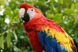 harry_scarlet_macaw20130205-22903-1cs5f77-0_960x