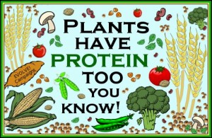 Pic for Blog- Protein for Vegetarians